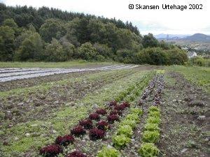 Ullandhaug økologiske dagligvarer